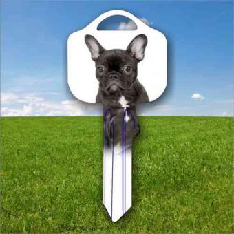 Tiermotiv Französische Bulldogge Hund